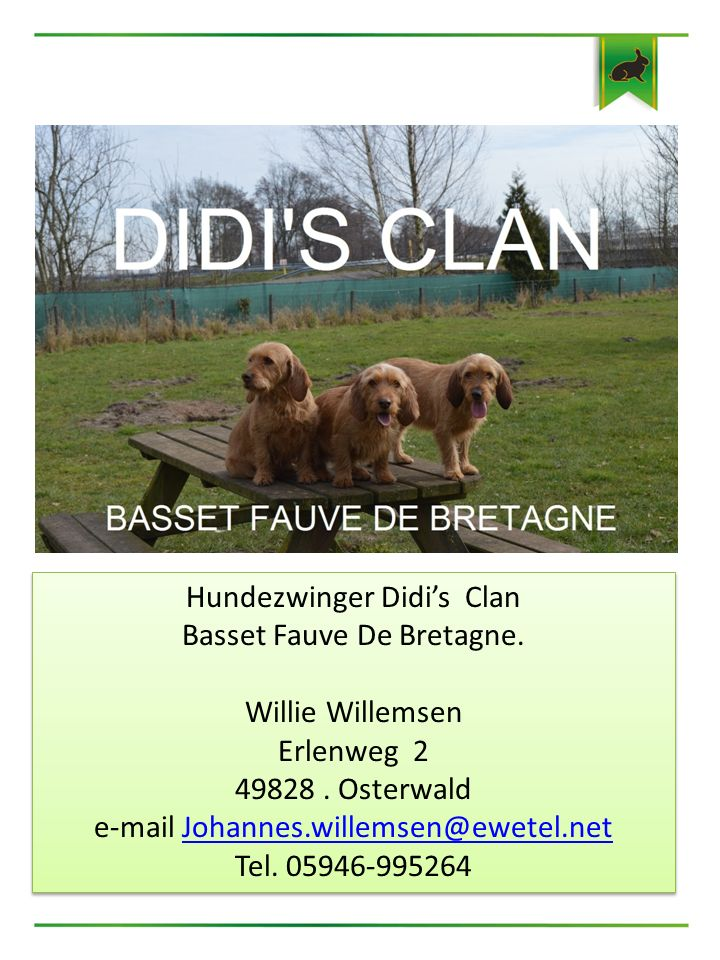 Hundezwinger Didi's Clan Basset Fauve De Bretagne. Willie Willemsen