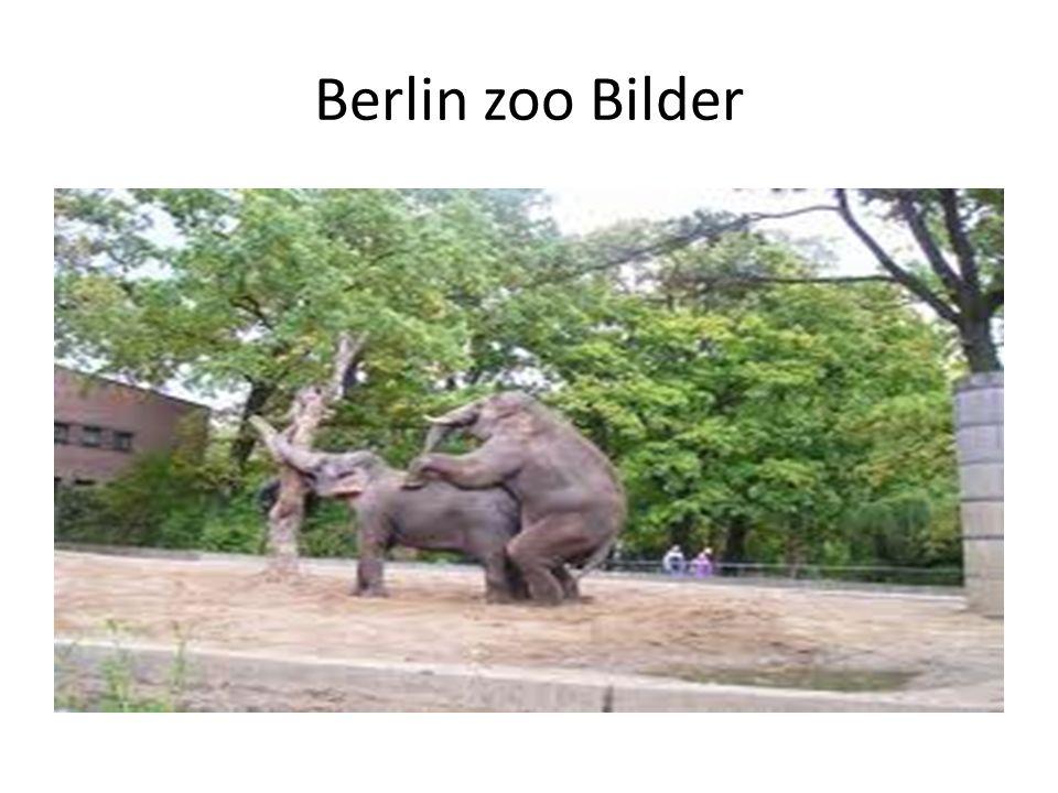 Berlin zoo Bilder