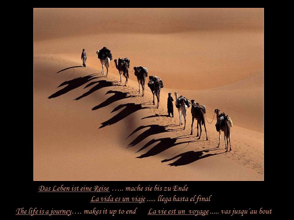 Das Leben ist eine Reise ….. mache sie bis zu Ende
