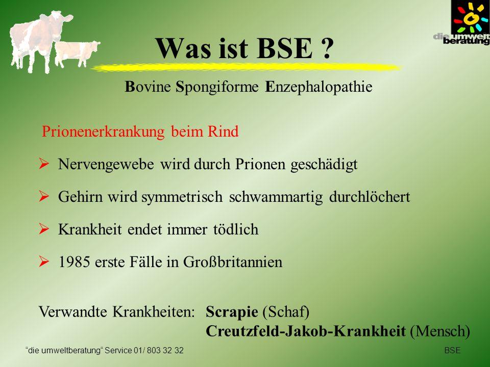 Bovine Spongiforme Enzephalopathie