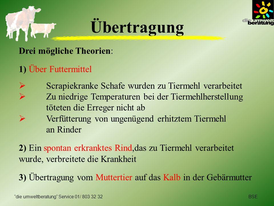 Übertragung Drei mögliche Theorien: 1) Über Futtermittel