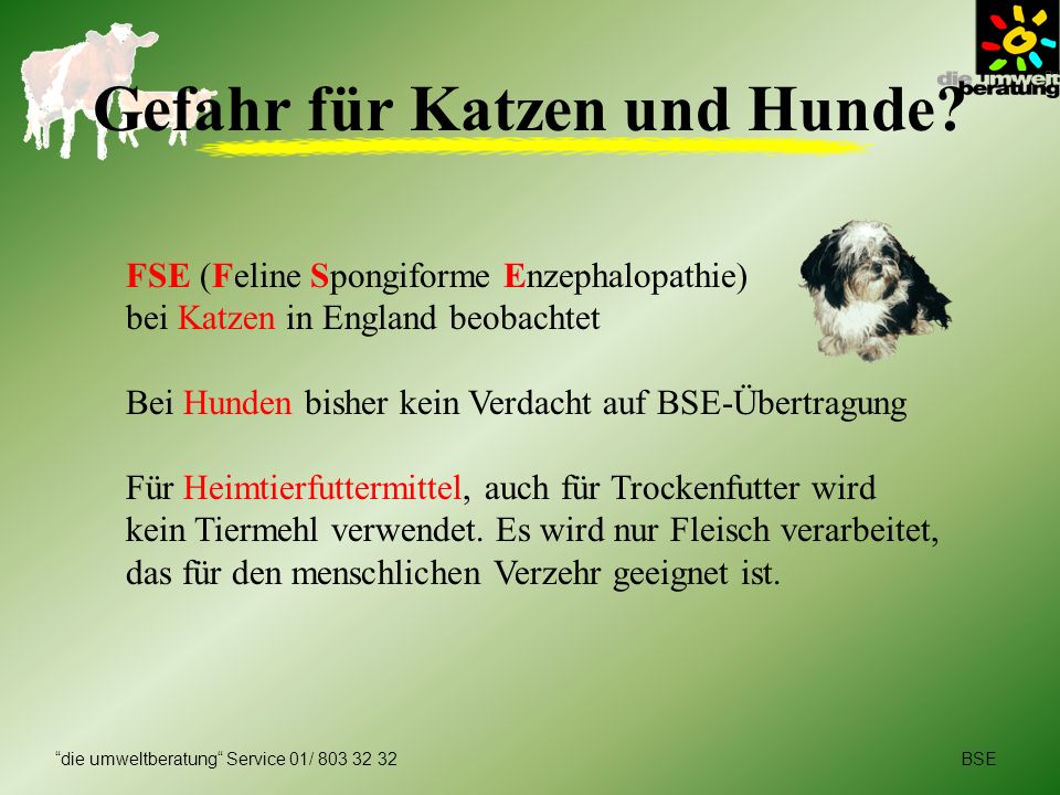 Gefahr für Katzen und Hunde