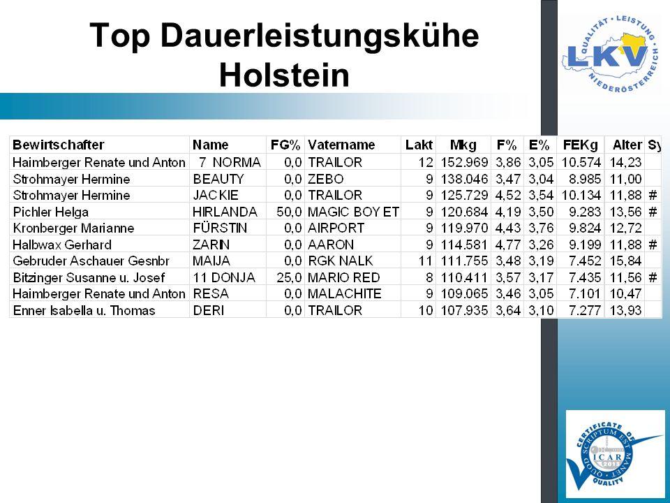 Top Dauerleistungskühe Holstein