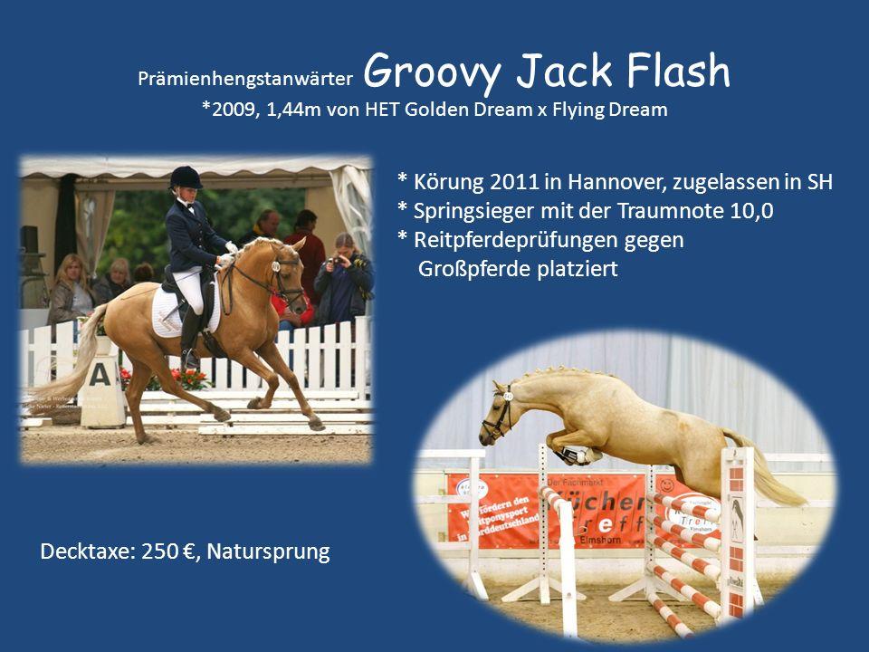* Körung 2011 in Hannover, zugelassen in SH