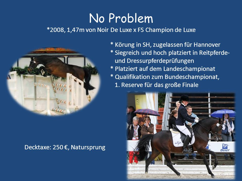 No Problem *2008, 1,47m von Noir De Luxe x FS Champion de Luxe