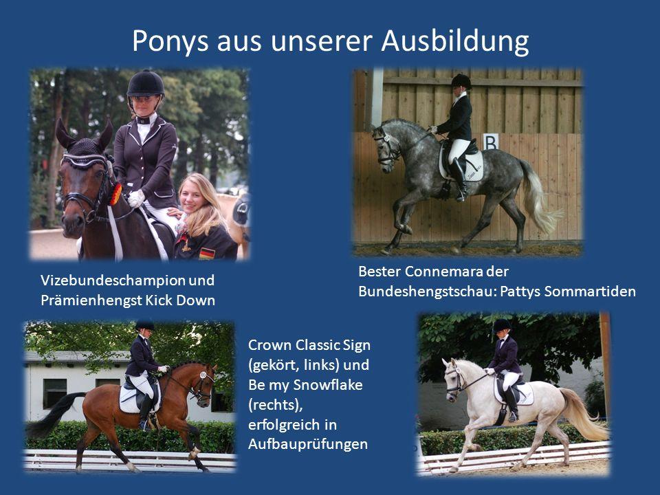Ponys aus unserer Ausbildung