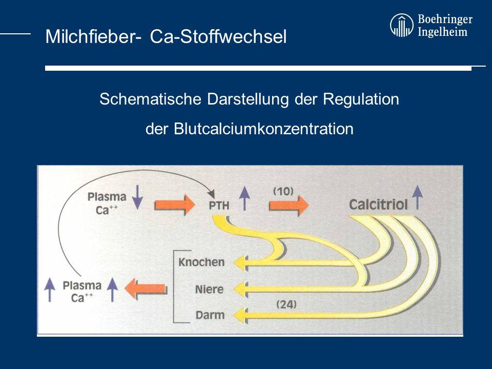 Milchfieber- Ca-Stoffwechsel