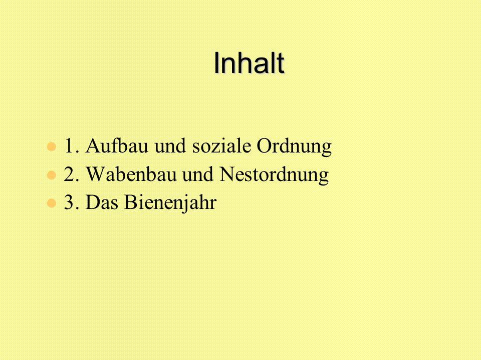 Inhalt 1. Aufbau und soziale Ordnung 2. Wabenbau und Nestordnung