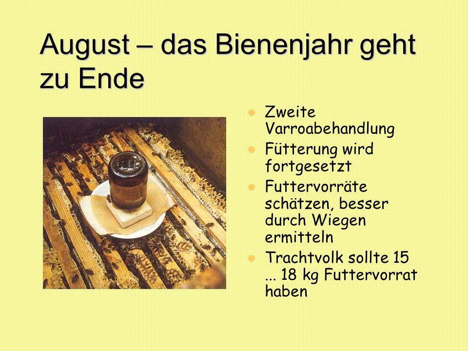 August – das Bienenjahr geht zu Ende
