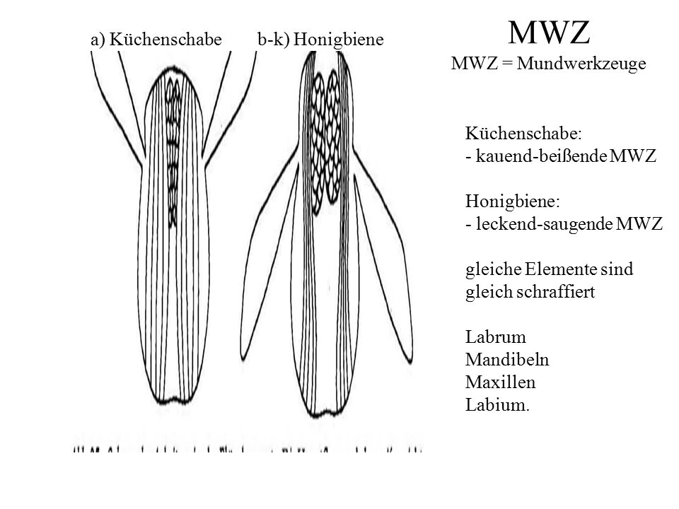 MWZ MWZ = Mundwerkzeuge