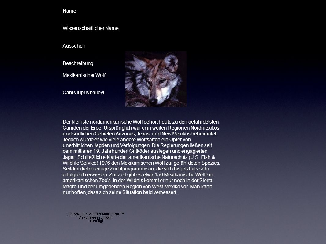 Name Wissenschaftlicher Name. Aussehen. Beschreibung. Mexikanischer Wolf. Canis lupus baileyi.