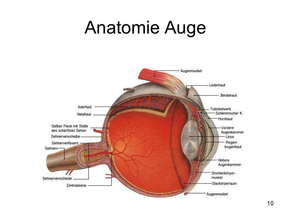 Schön Objektiv Auge Anatomie Galerie - Menschliche Anatomie Bilder ...