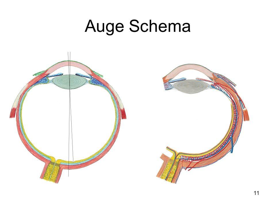 Tolle Auge Anatomie Ppt Bilder - Menschliche Anatomie Bilder ...