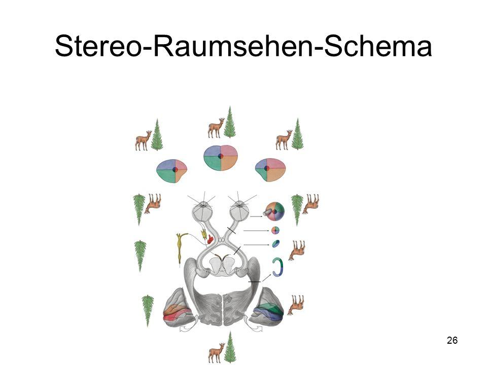 Stereo-Raumsehen-Schema
