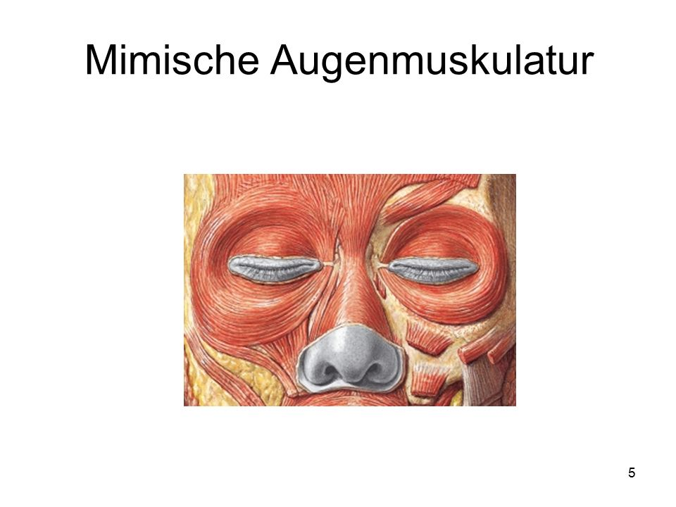 Mimische Augenmuskulatur