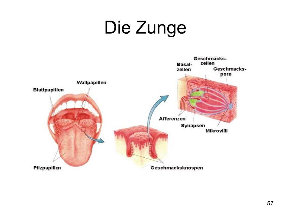 Schön Geschmacksknospen Der Zunge Galerie - Menschliche Anatomie ...