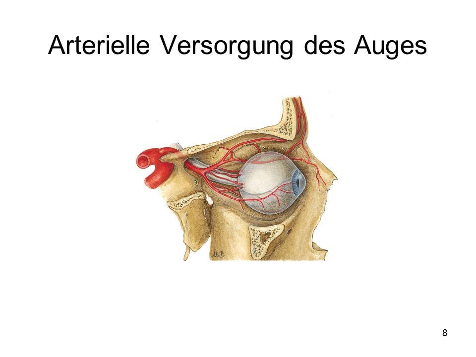 Arterielle Versorgung des Auges