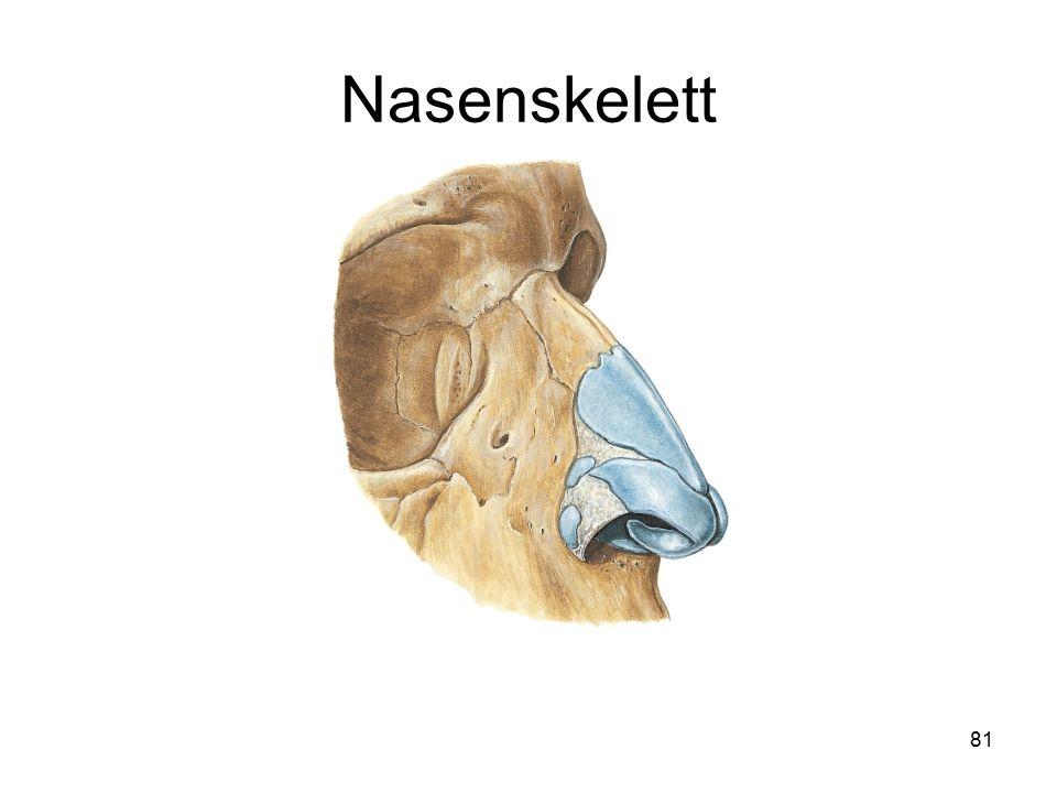 Nasenskelett