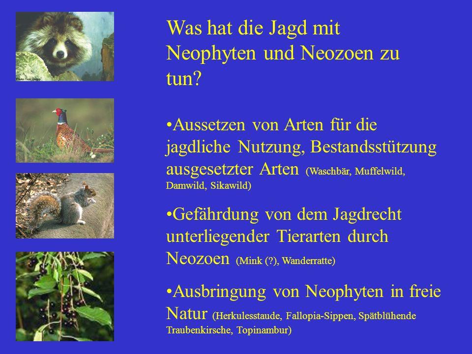 Was hat die Jagd mit Neophyten und Neozoen zu tun