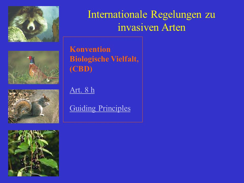 Internationale Regelungen zu invasiven Arten