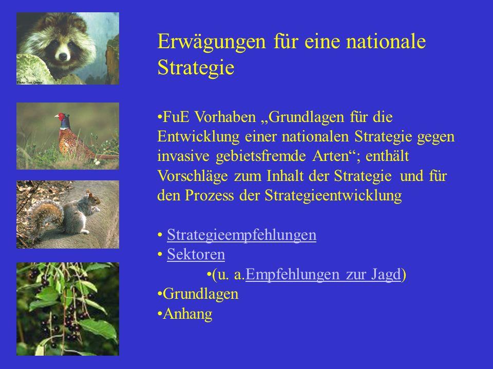 Erwägungen für eine nationale Strategie