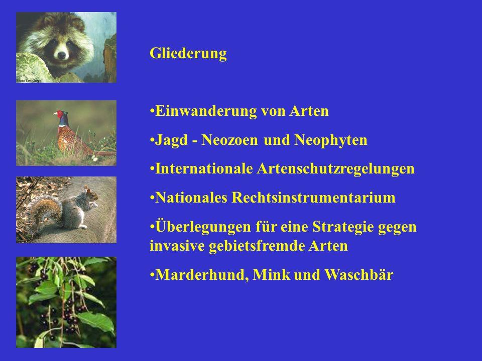 Einwanderung von Arten Jagd - Neozoen und Neophyten