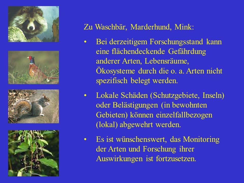 Zu Waschbär, Marderhund, Mink: