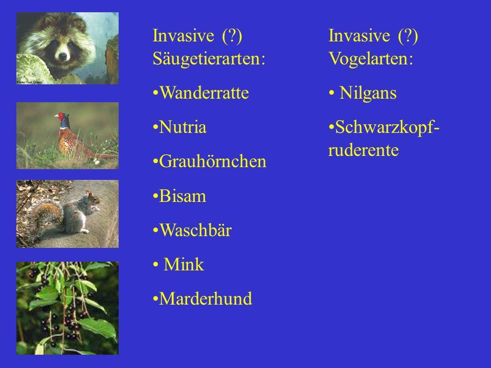 Invasive ( ) Säugetierarten: