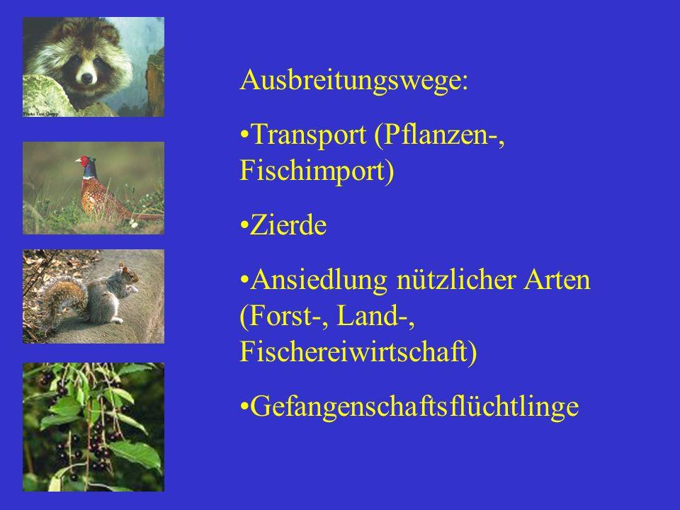 Ausbreitungswege: Transport (Pflanzen-, Fischimport) Zierde. Ansiedlung nützlicher Arten (Forst-, Land-, Fischereiwirtschaft)