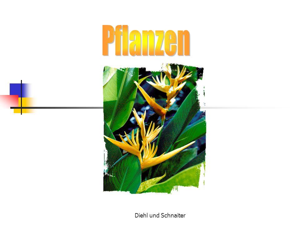 Pflanzen Diehl und Schnaiter
