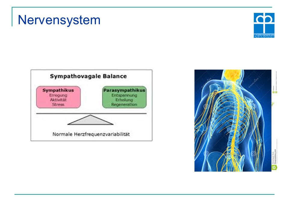Nervensystem Sympathetic Excitation Activation
