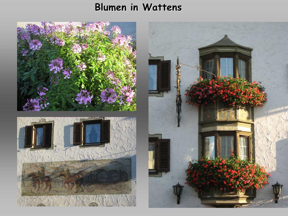 Blumen in Wattens