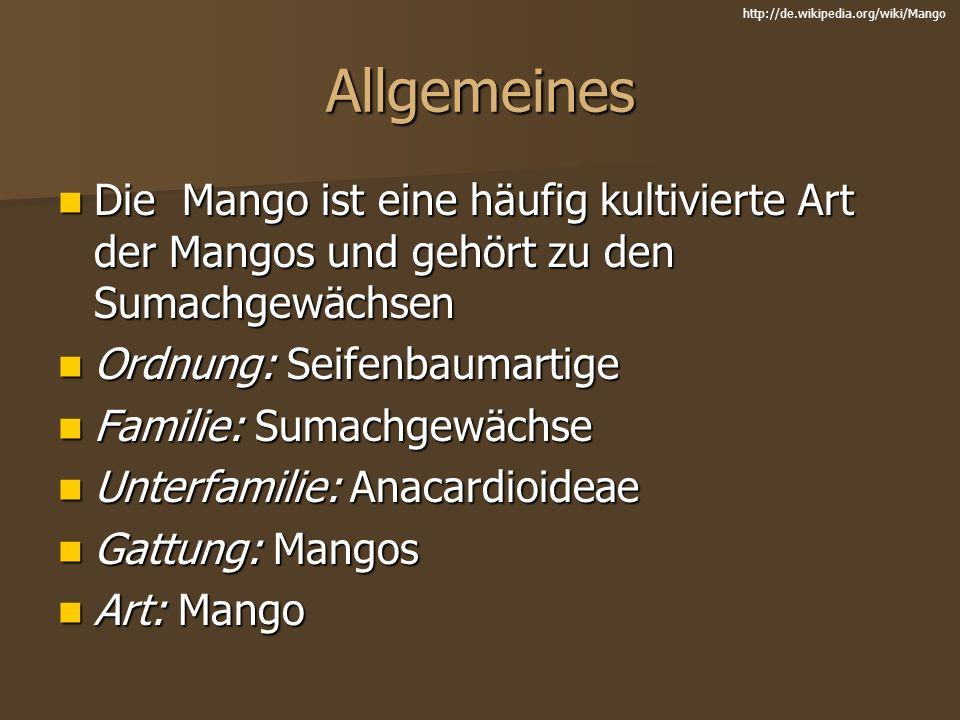 http://de.wikipedia.org/wiki/Mango Allgemeines. Die Mango ist eine häufig kultivierte Art der Mangos und gehört zu den Sumachgewächsen.
