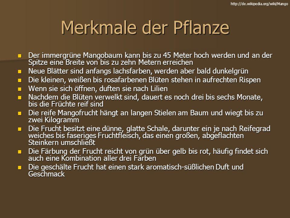 http://de.wikipedia.org/wiki/Mango Merkmale der Pflanze.