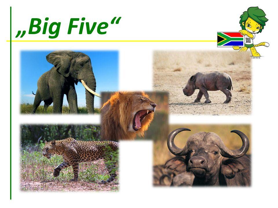 """""""Big Five"""