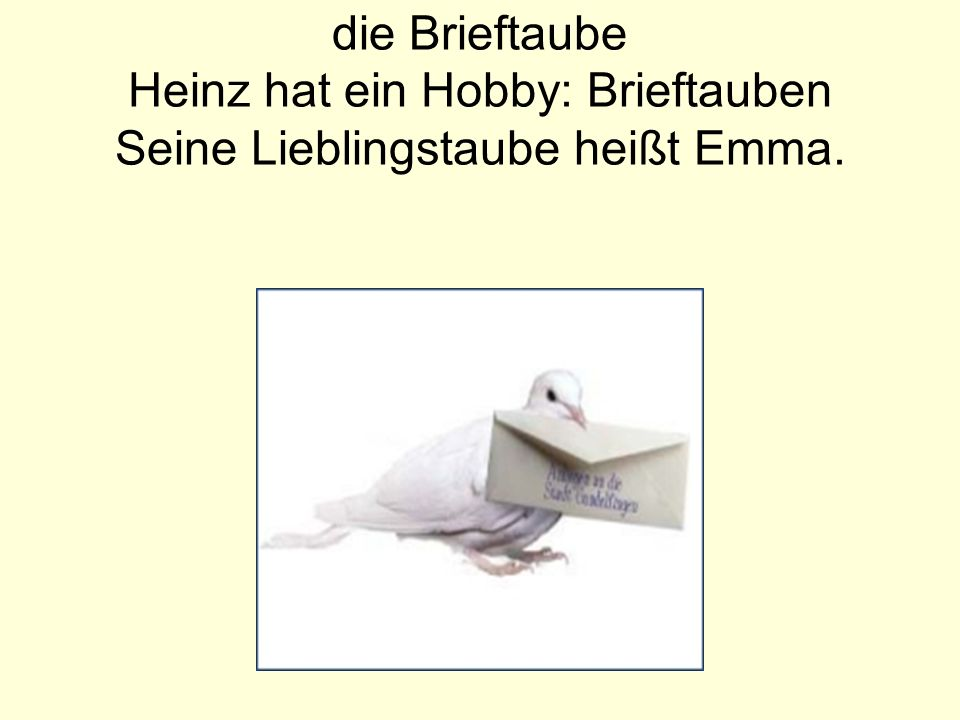 die Brieftaube Heinz hat ein Hobby: Brieftauben Seine Lieblingstaube heißt Emma.