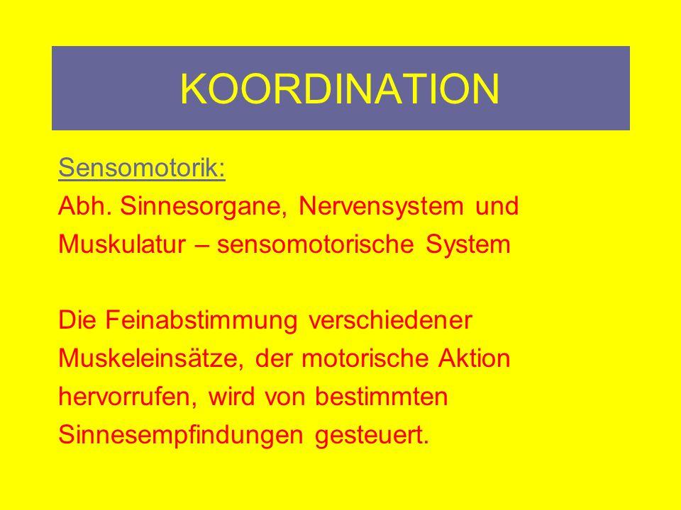 KOORDINATION Sensomotorik: Abh. Sinnesorgane, Nervensystem und