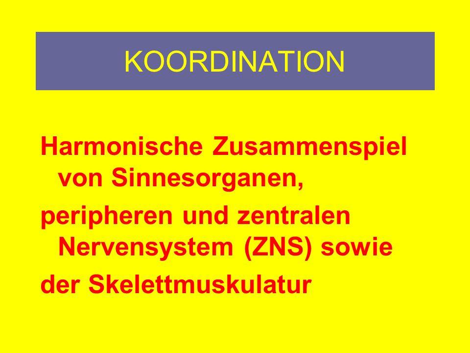 KOORDINATION Harmonische Zusammenspiel von Sinnesorganen,