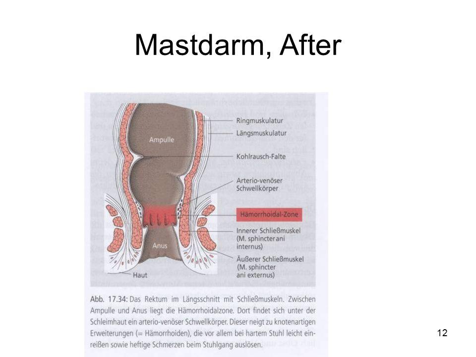Mastdarm, After