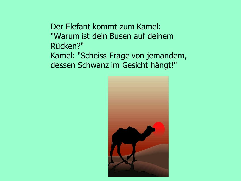 Der Elefant kommt zum Kamel: