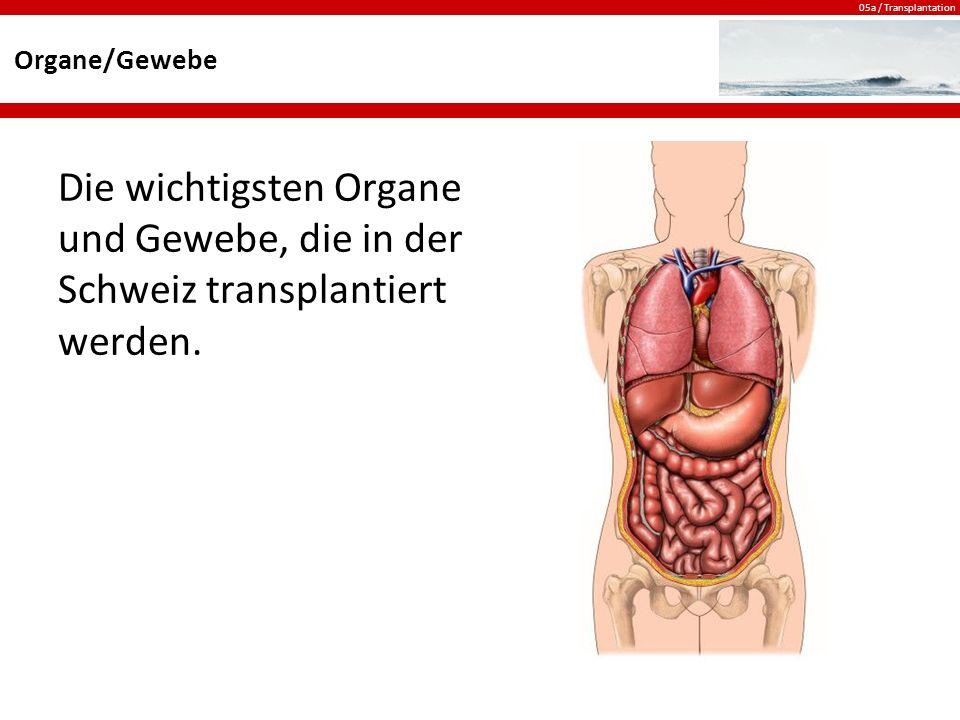 Organe/Gewebe Die wichtigsten Organe und Gewebe, die in der Schweiz transplantiert werden.