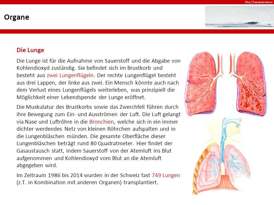 Organe Die Lunge.