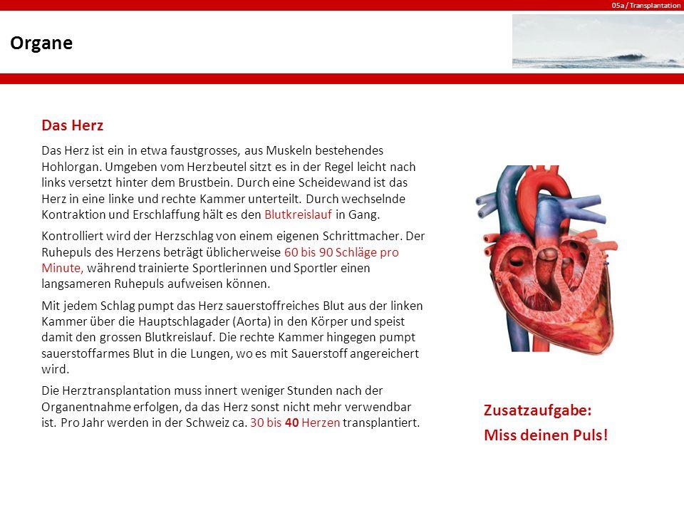 Organe Das Herz Zusatzaufgabe: Miss deinen Puls!