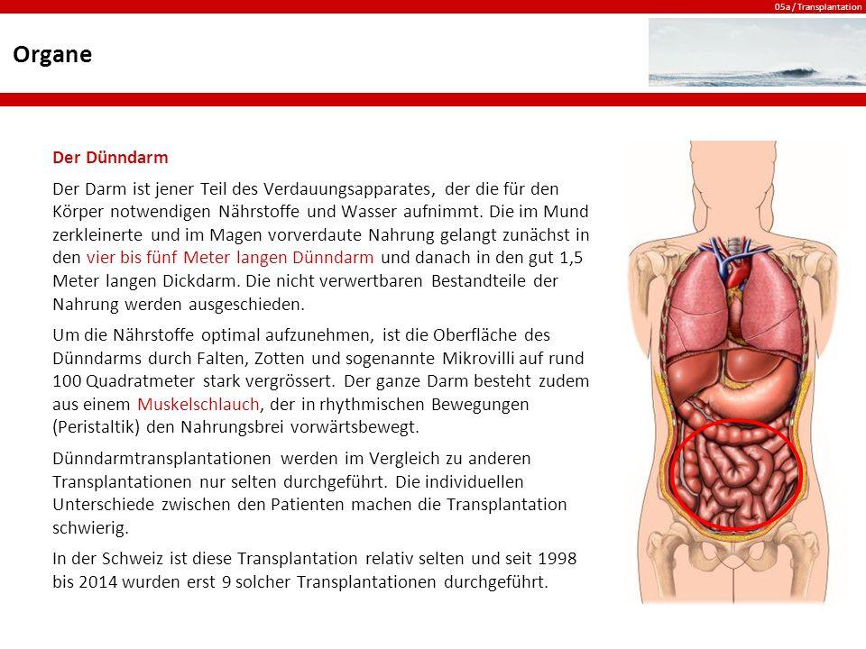 Ziemlich Organe Im Körper Bild Zeitgenössisch - Menschliche Anatomie ...