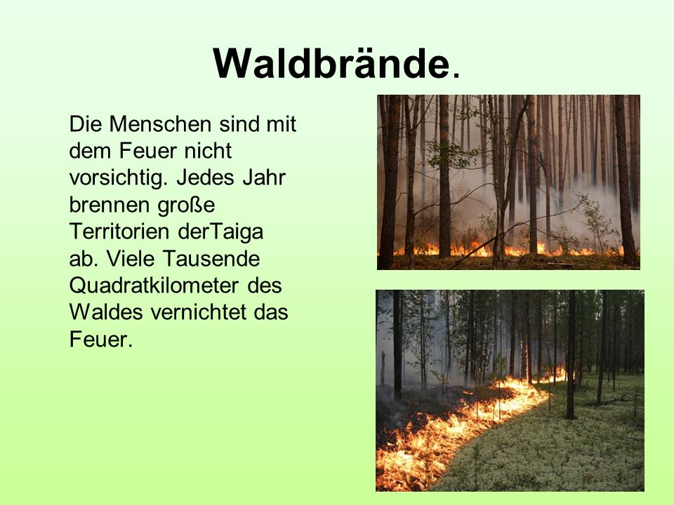 Waldbrände.