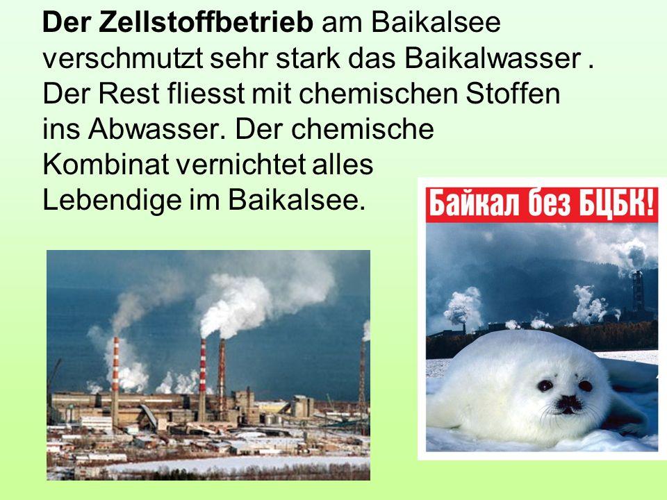 Der Zellstoffbetrieb am Baikalsee verschmutzt sehr stark das Baikalwasser .