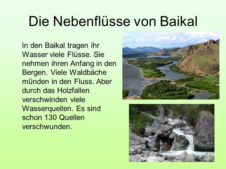 Die Nebenflüsse von Baikal