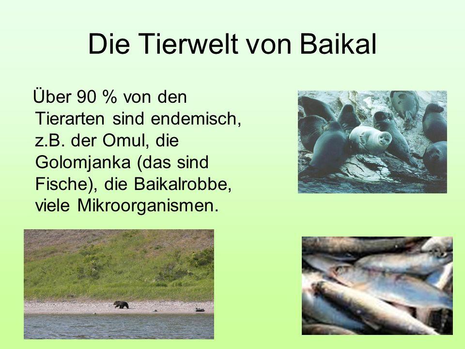 Die Tierwelt von Baikal