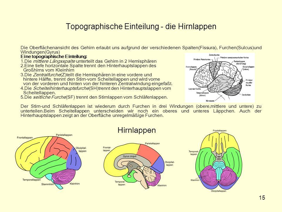 Topographische Einteilung - die Hirnlappen