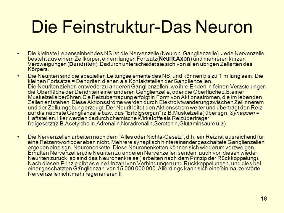 Die Feinstruktur-Das Neuron